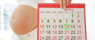 Дата родов по последним месячным